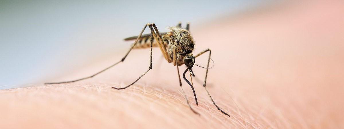 Risk Assessment/Vectors Management Plan for West Nile Virus: New York